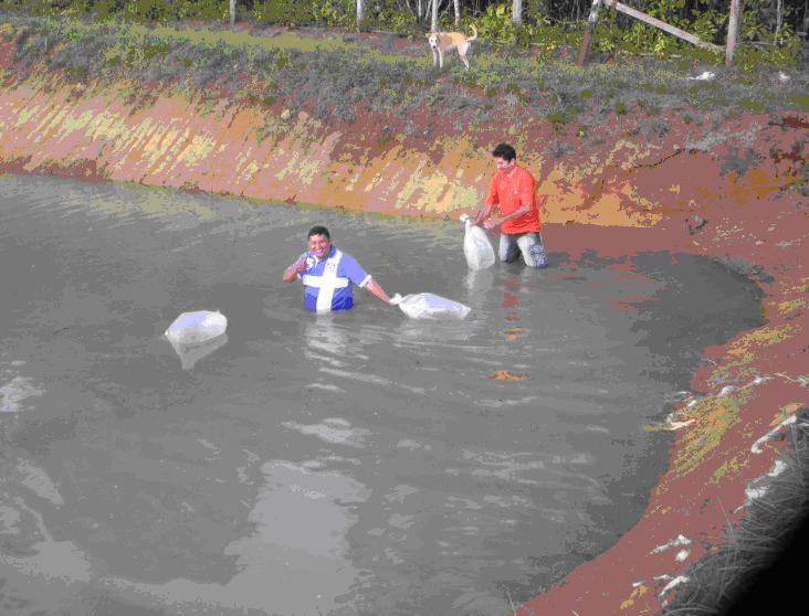 Governo do amazonas incentiva a cria o de peixes em for Criadero de cachamas en tanques