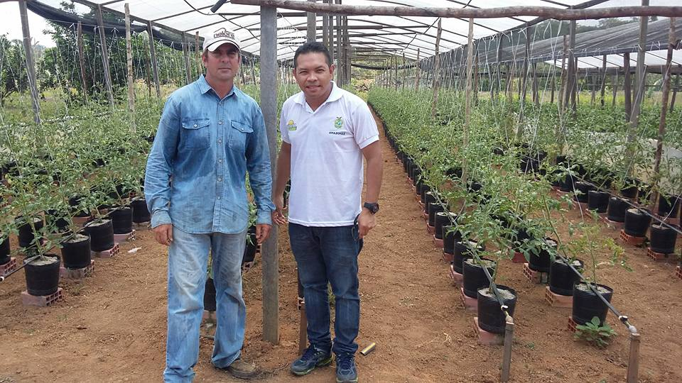 cultivo-em-vaso-2
