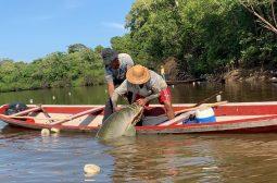 Assistência técnica do Idam fortalece pesca manejada do pirarucu no Amazonas
