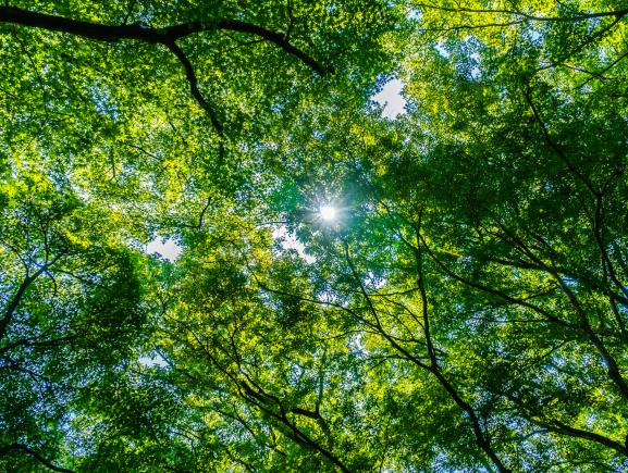UEA  está com inscrições abertas para pós-graduação em Negócios na Floresta Amazônica