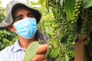 Idam celebrará Dia do Agricultor com exposição de produtos da agricultura familiar