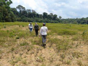 Governo do Amazonas investe na produção de sementes de malva em parceria entre Idam e Ufam